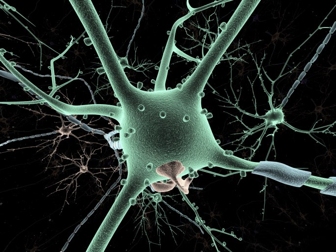 Discovery of Brain Neurons Could Improve Autism Understanding