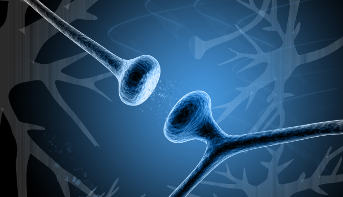 Autism Linked to Excess Synapses in Adolescent Brains