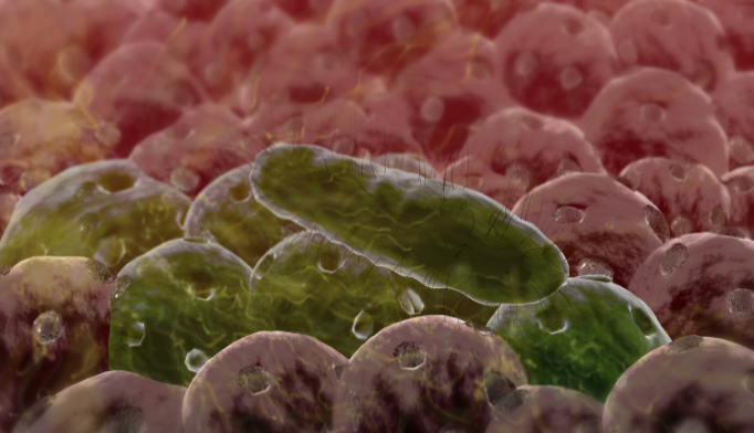 'Good' Bacteria in the Gut May Alleviate Anxiety