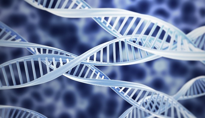 Gene Discovered That May Play Role in Anxiety, Schizophrenia