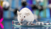 Potential Biomarkers of Addiction Risk in Rats Identified