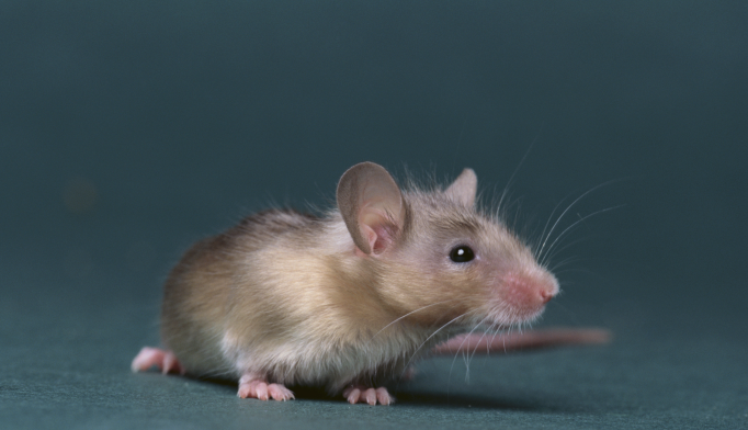 Mouse Brain Map Could Help Research Into Mental Illnesses