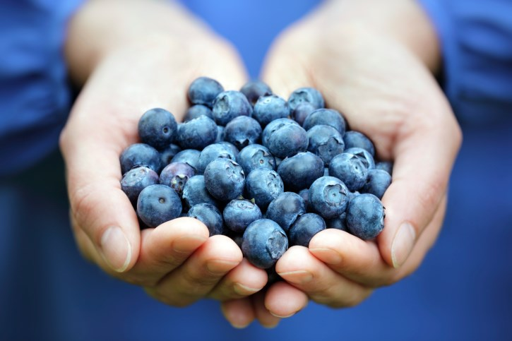 There was improvement in cognitive performance and brain function in those who took the blueberry powder.