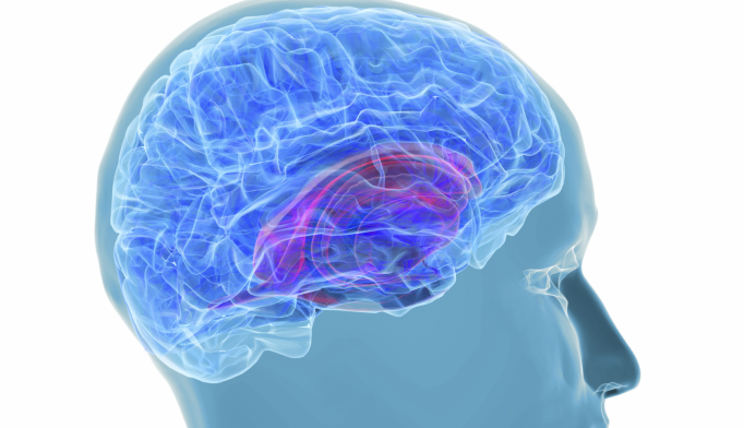 How we use the GPS inside our brain to navigate offers insight into memory loss in Alzheimer's