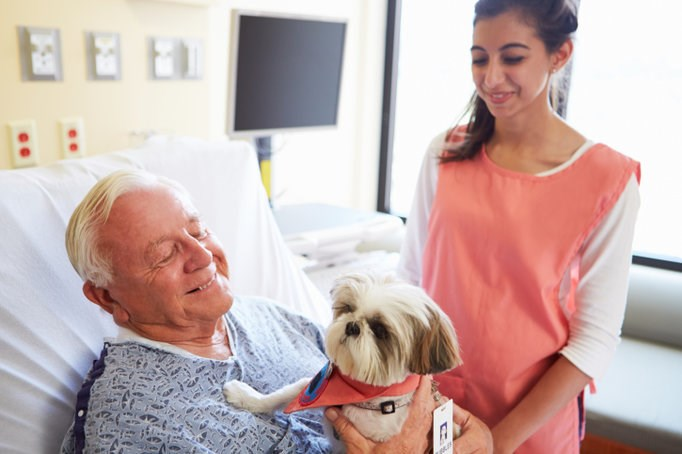 Therapy Dogs Alleviate Stress Associated with Cancer Treatment
