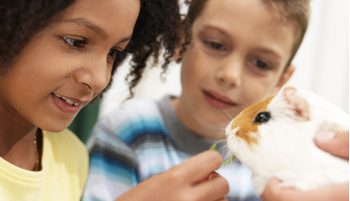 Pets May Help Ease Social Anxiety in Kids With Autism