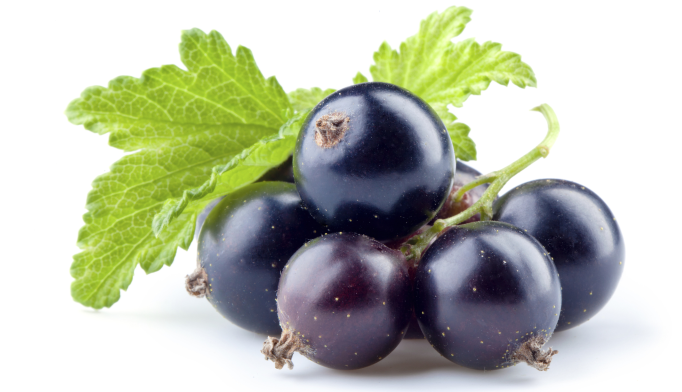 Blackcurrant Juice Could Reduce Depression, Parkinson's Symptoms
