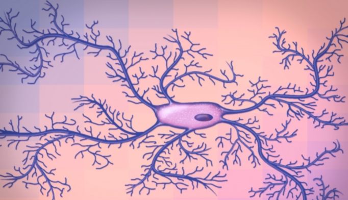 Malfunctioning microglia can cause depression, but drugs that restore the normal functioning of them can be as effective as antidepressants. Image courtesy of MIT.