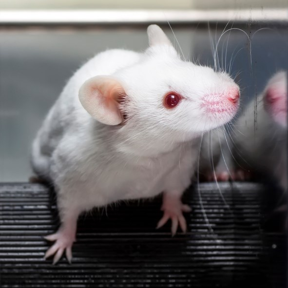 New findings in a rodent model point to a shared molecular pathway for the antidepressant activity of ethanol and rapid antidepressants.