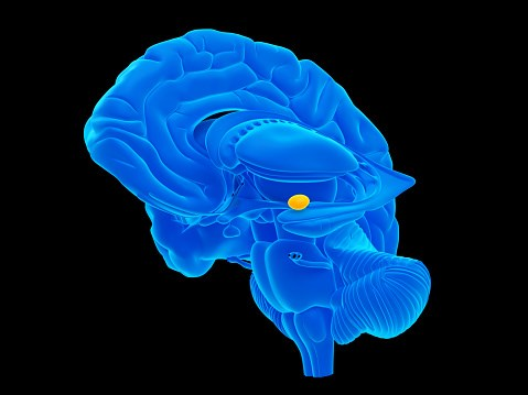Individuals with bilateral damage to the amygdala can still feel fear.