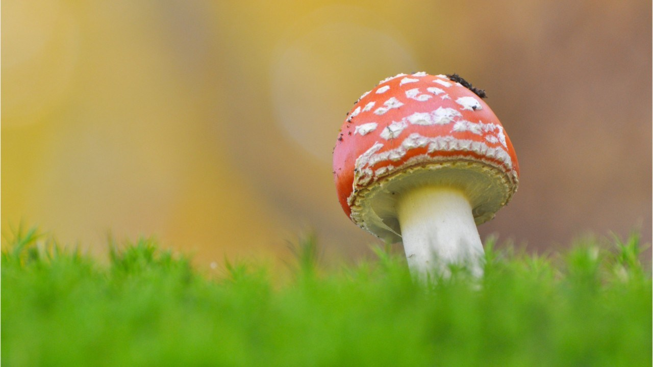 Psychedelic Mushrooms May Benefit Patients With Depression Unresponsive to Treatment