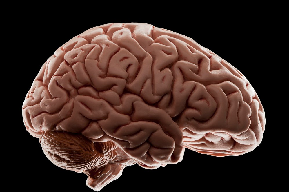 Brain Cortical Changes After Major Depressive Disorder Relapse