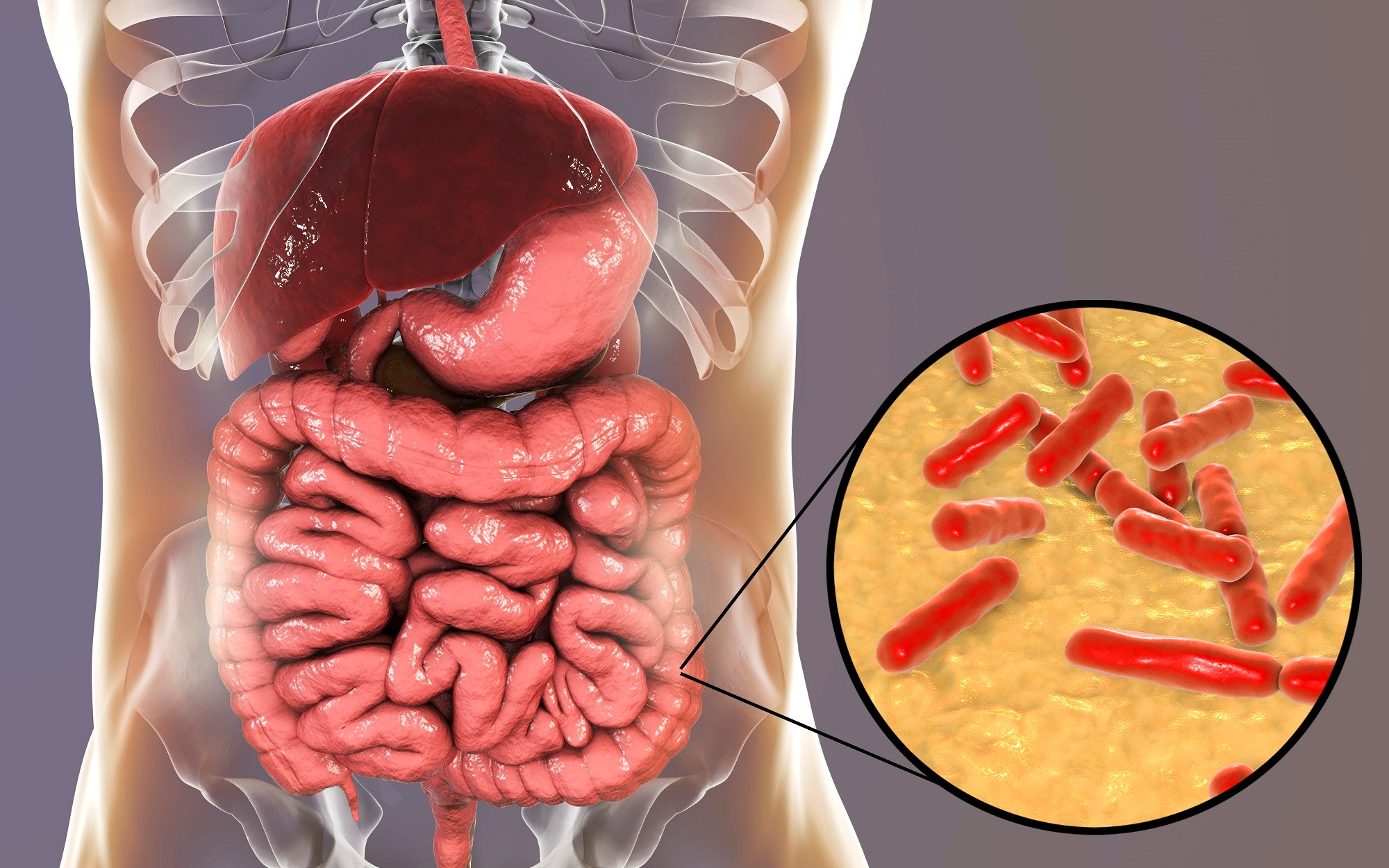Probiotics, Depression, and the Role of Inflammation